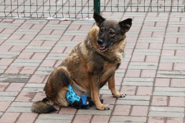 Собака Вьюга вместе со Стичем отправится на автомобиле к новым хозяевам.