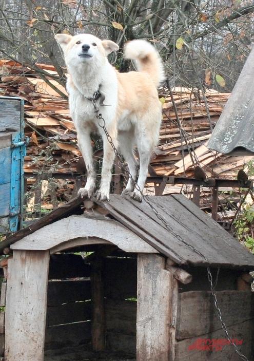 Единственную собаку в Простоквашино зовут не как мультяшного персонажа - Шариком, а Бобиком.