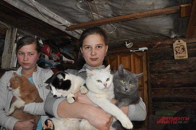 В день приезда корреспондента АиФ котам делали прививки