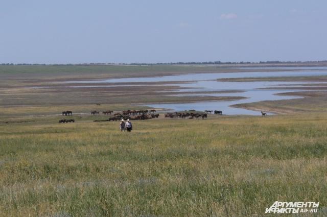 На острове Водный уже полвека живут дикие лошади