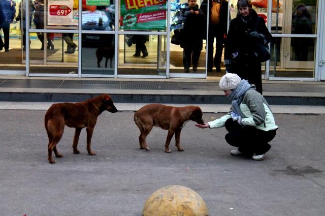 Бездомные животные тоже ждут помощи от добрых людей.