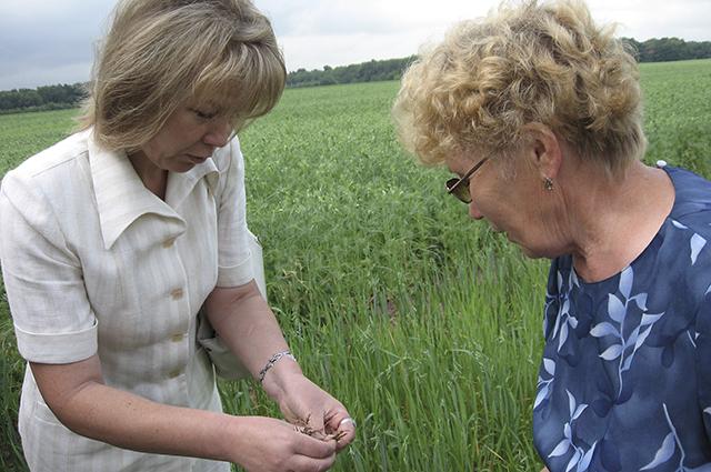 Галина Баталова (слева) специализируется на зерновых культурах.