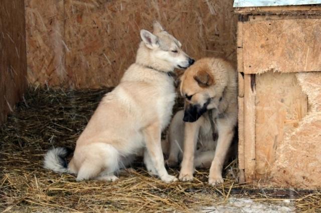 Наталья Федорова: «Бытовые моменты - такая мелочь по сравнению с радостью, когда на твоих глазах выздоравливает животное!»