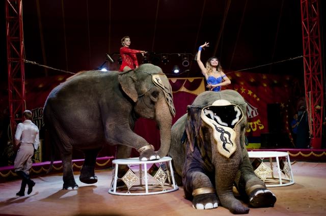 Большой Варшавский цирк приехал на гастроли в Яровое.
