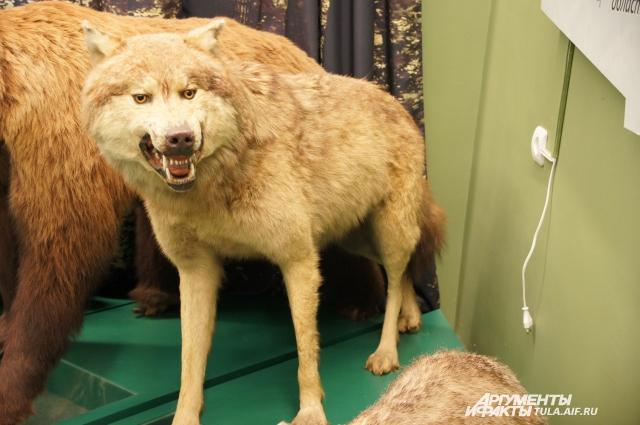 Этого волка сострунил лично великий князь Николай Романов.