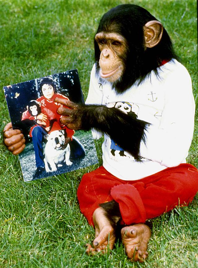 Шимпанзе Майкла Джексона