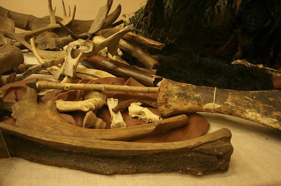 Чаще всего на стоянках находили кости некрупных животных.