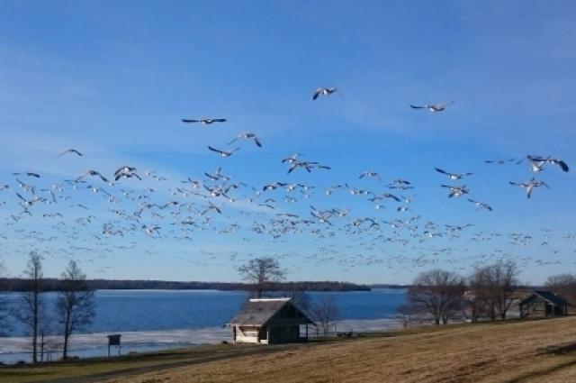 Десятки тысяч птиц на острове