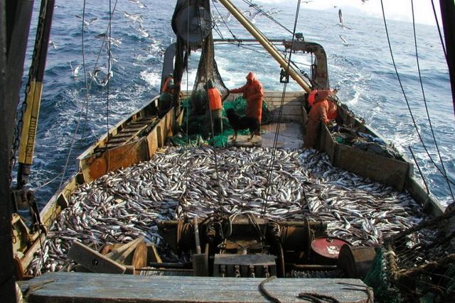 Рыбаки на промысле минтая.