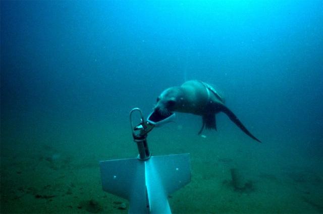 Морской лев в рамках Программы военно-морского флота США восстанавливает связь в части испытательного оборудования