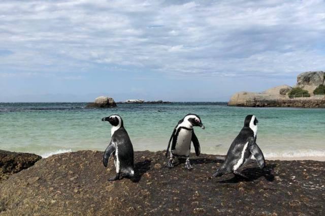 Природа в ЮАР удивительная.