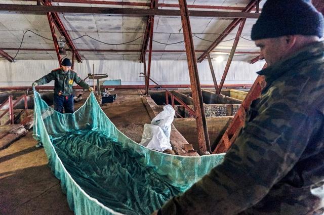 В месяц хозяйство производит порядка 400 тонн рыбы.