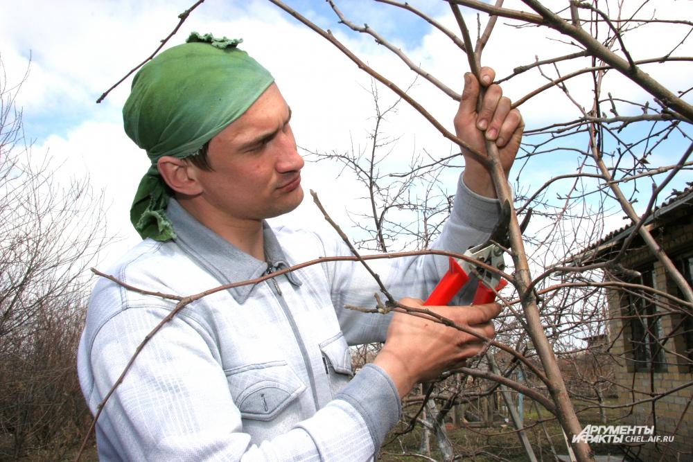 Весной необходимо освободить деревья и кусты от засохших и больных ветвей.