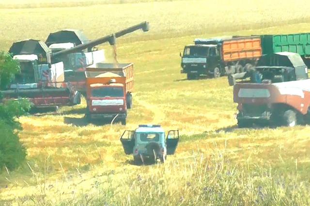 Незаконный покос пшеницы, несмотря на два решения суда, происходил под присмотром местных полицейских.