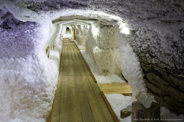 В подземном музее мерзлоты можно увидеть деревья, которым 50 тыс. лет.
