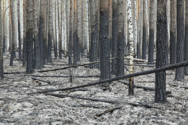 Лес после пожара в Юргинском районе, май 2021 года.