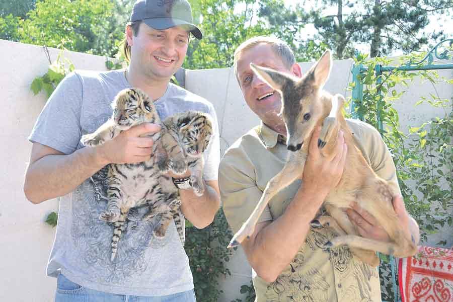 Эдгард Запашный не смог скрыть своего удивления - тигрица охотно дала поняньчить своих котят.