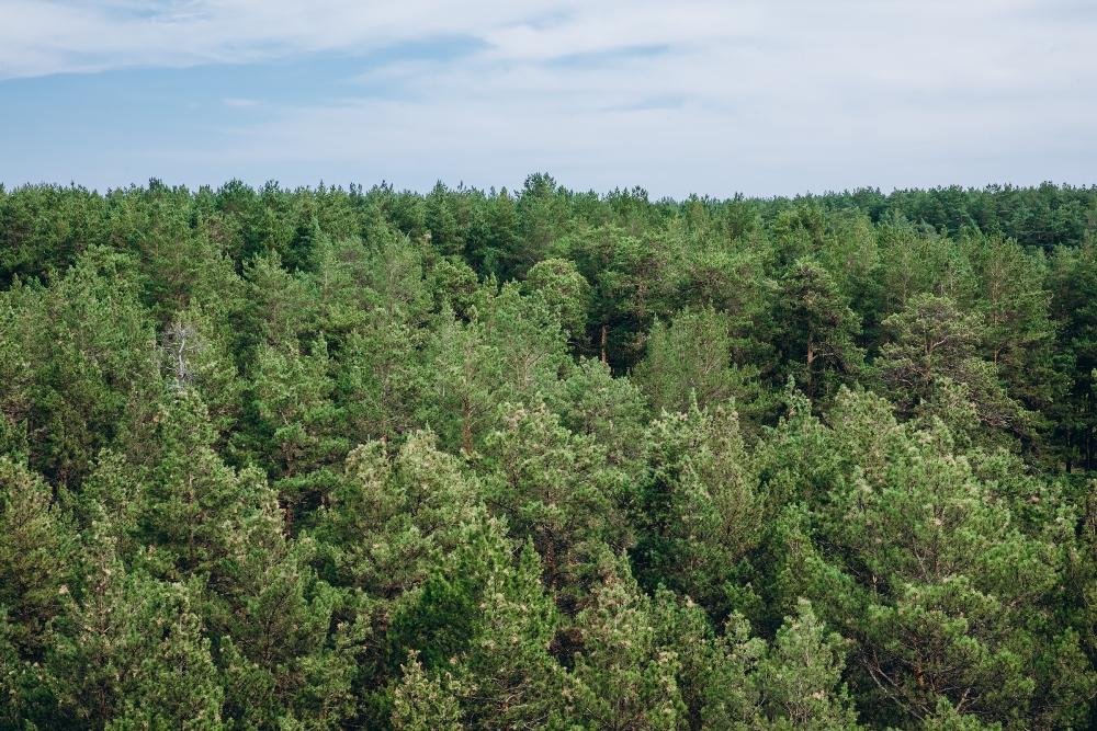 Деревья надёжно защищают резиденцию от влияния города.
