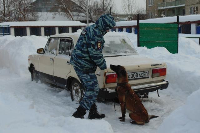 служебная собака, поиск наркотиков в машине