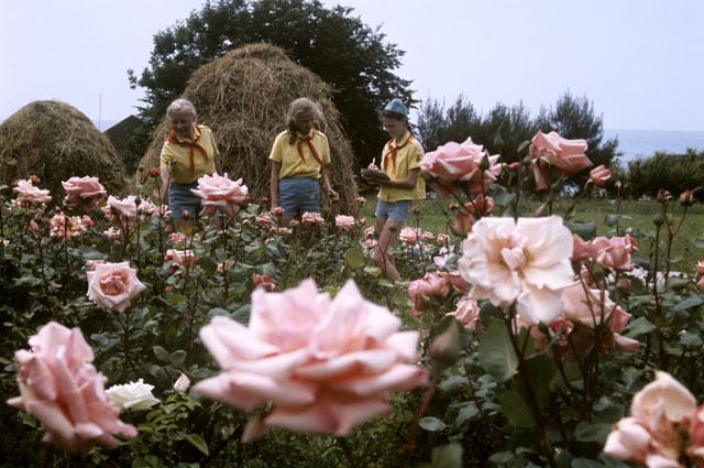 «На клумбах цвели невиданные доселе розы. Другая планета!»