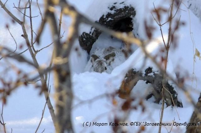 Разглядеть зайца среди снега и деревьев не так-то и просто.