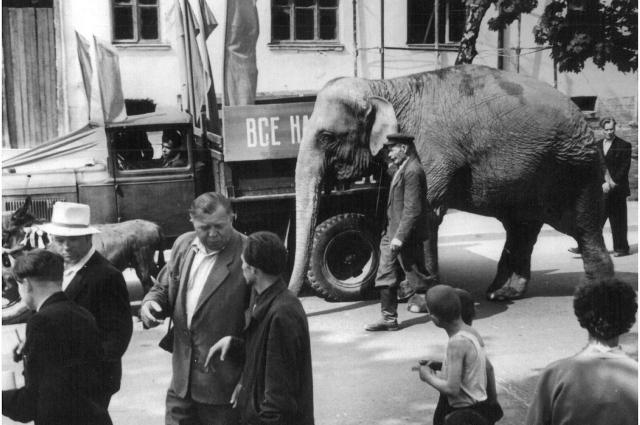 Преголю и Манюню вели до зоопарка прямо по улицам города.