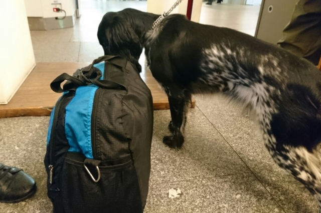 Около часа Тея досматривает багаж. Потом идёт отдыхать.