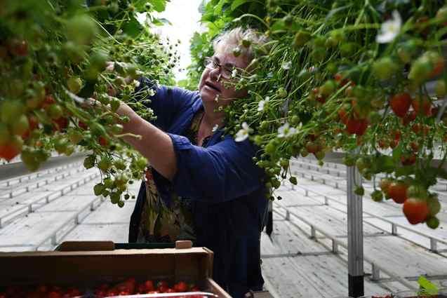 С каждым годом растёт урожайность овощей закрытого грунта, и появляются новые рабочие места.