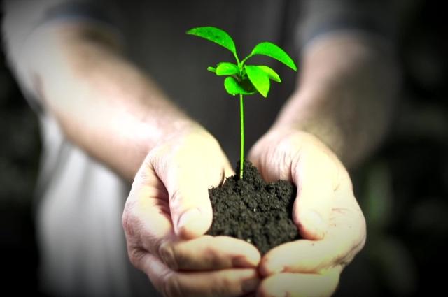 Этот материал можно применять для решения проблемы парникового эффекта