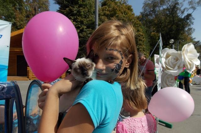 Сеанс фелинотерапии – лечение кошками