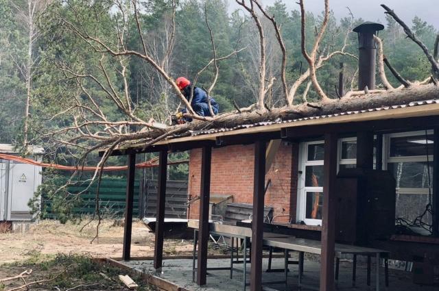 Дерево распилили и спустили с крыши.