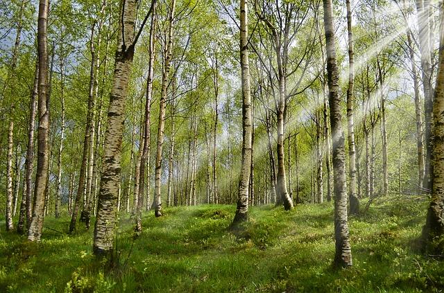 Клещи не прыгают с деревьев, они обычно находятся в высокой траве.