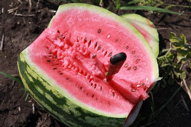 Чаще всего выгоду от арбуза просчитать не удаётся, слишком много факторов влияет на урожайность.