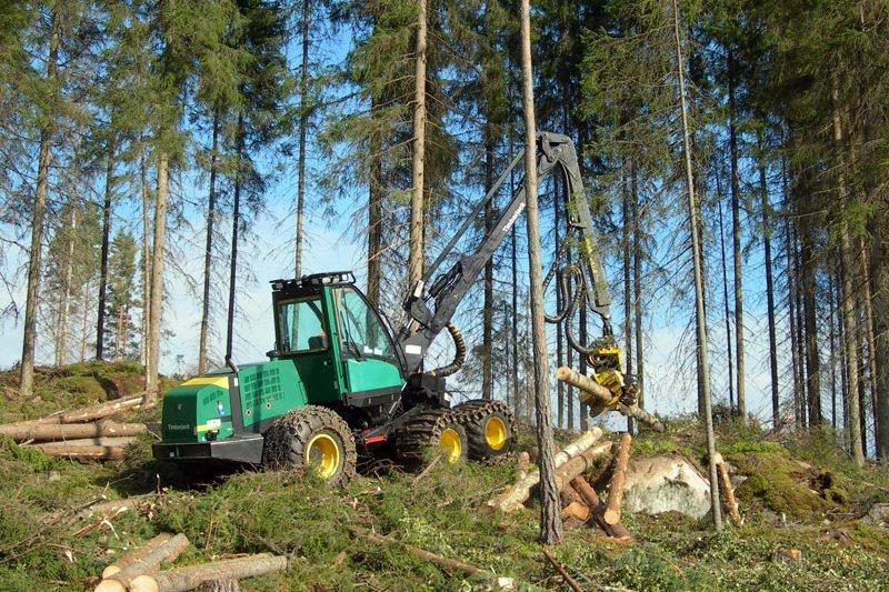 По неофициальным данным, в России воруют где-то 5-ю или даже 4-ю часть от всей заготовки леса