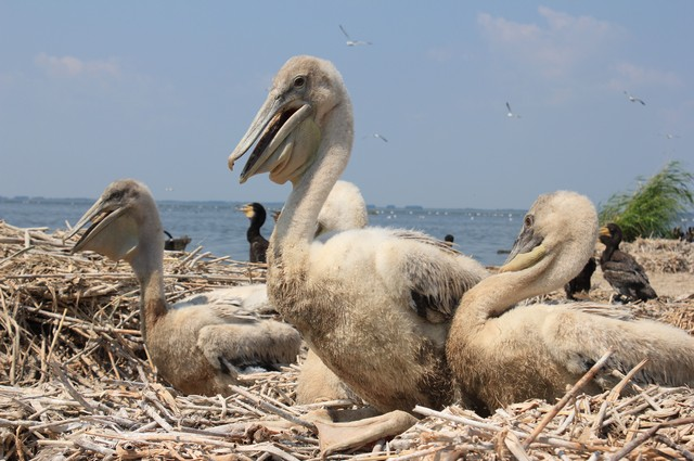Острова с пеликанами - изюминка области.