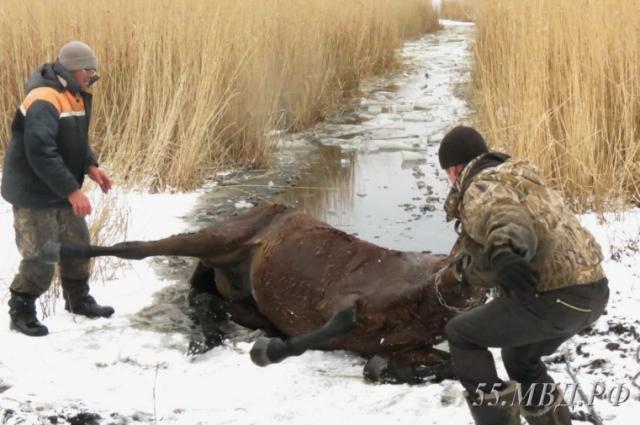 Несчастное животное бросили замерзать в ледяной воде.