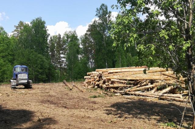 Вырубка леса под Маганском.