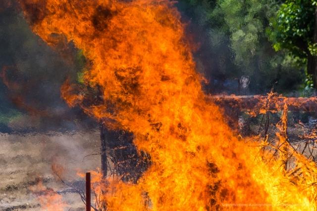 В сухую и ветренную погоду страшны пожары в лесах и на дачных участках.