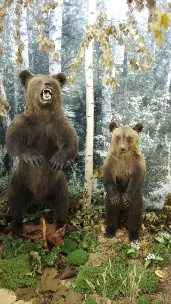 Центральная экспозиция демонстрирует фрагмент леса с произраста- ющими в нём деревьями, травами, мхом и обитающим зверьём и птицами: бурым медведем, бобром, куницей, глухарём, тетеревами и утками.