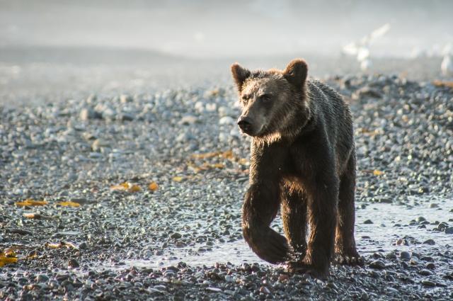 Поведение медведя никогда нельзя предсказать.