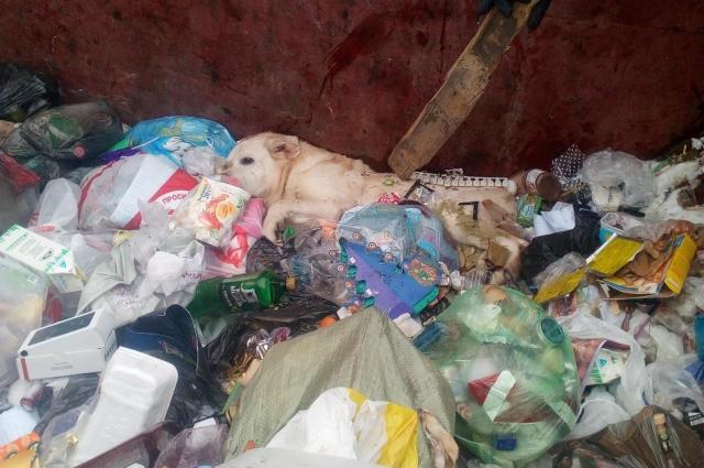 Среди мусора, в самом углу, лежала живая собака!