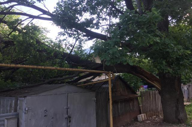 Падение дерева в Уфе