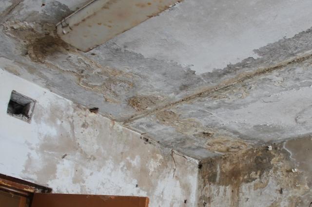 Почти все жилые помещения в доме поражены плесенью.