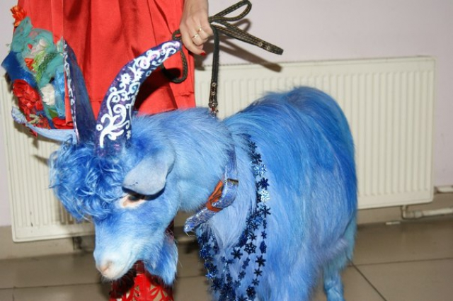 Картинки синий козел