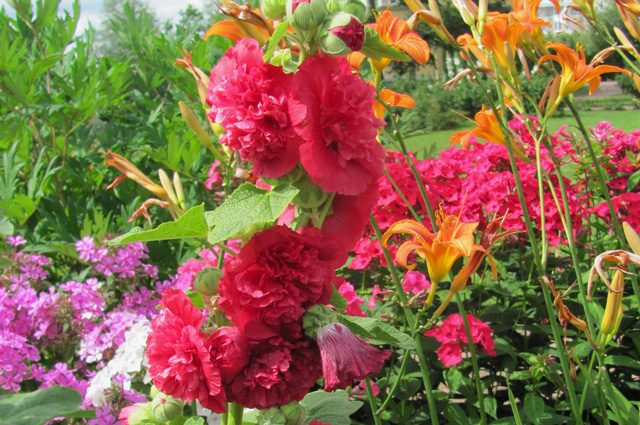 'Chaters Scarlet'