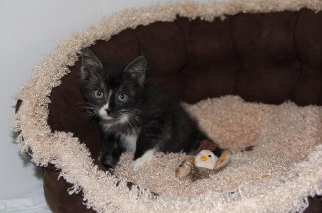 Котенка ждет долгая и счастливая жизнь, уверена Светлана.