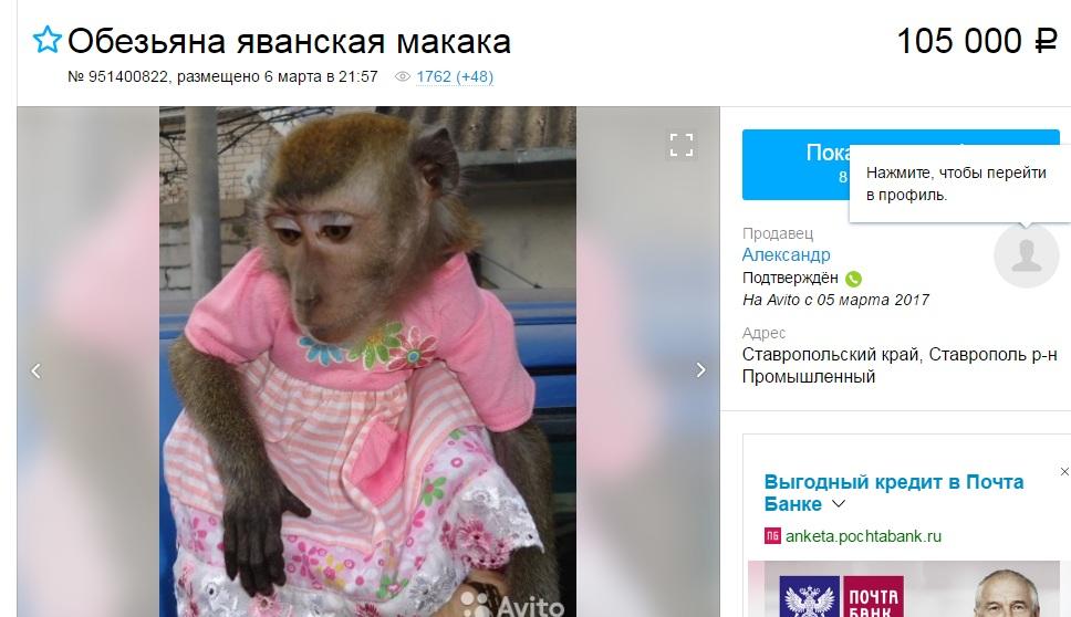 фото с сайта www.avito.ru