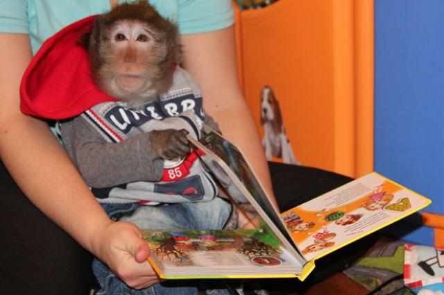 Ване нравится листать книжки с картинками.