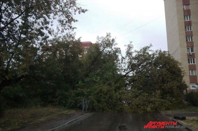 На ул. Клименко упавшее дерево перегородило проезжую часть.