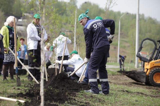 Берёзовая аллея - это символичный подарок к юбилею Ленинского района.